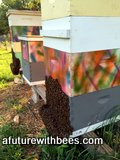 Honey bee hive with beard of bees
