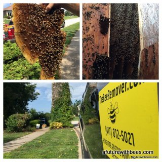 Millwood Honey Bee Rescue