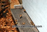 Honey bees flying into the hive in slow motion