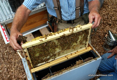 Week by week guideline for managing your new package of bees