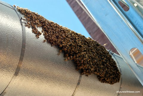 Stairs to roof bee swarm