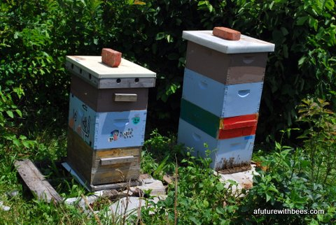 Honeybee hives in the apiary