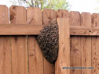Queen Killing Swarm